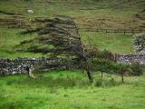 drzewo-na-skye
