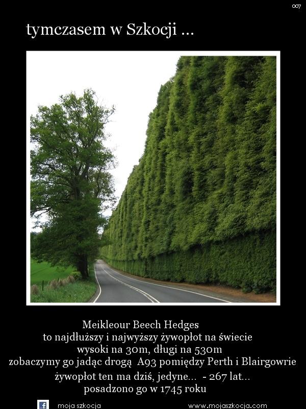 Kopia 007 - Meikleour Beech Hedges