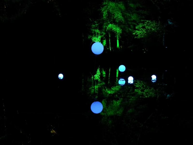 Enchanted Forest_06