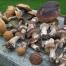 grzyby w szkocji