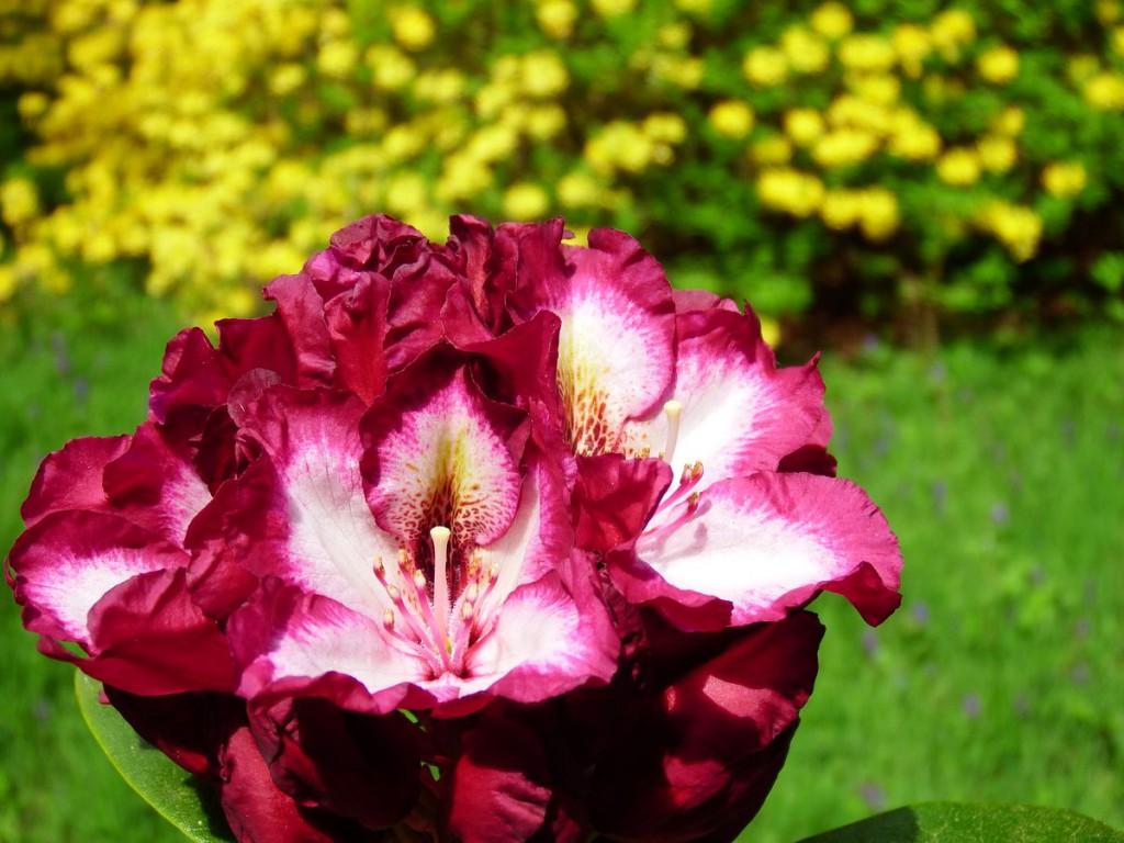 ogrody w Cortachy -0010