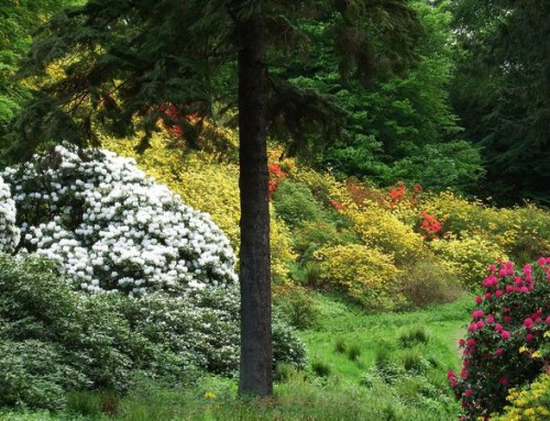 ogrody zamku Cortachy