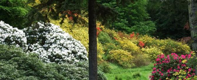 ogrody w Cortachy  -0011