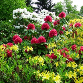 ogrody w Cortachy -0018