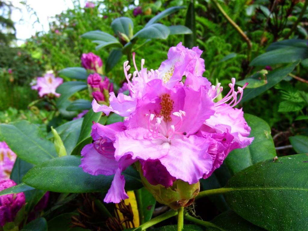 ogrody w Cortachy -0030