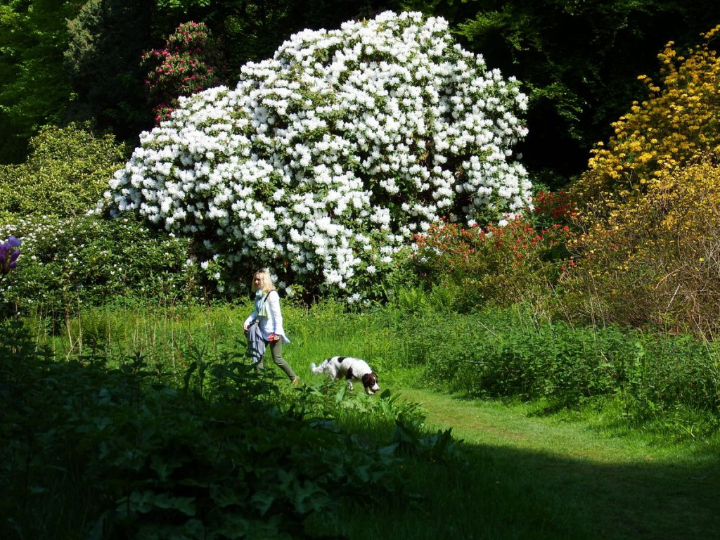 ogrody w Cortachy -0035