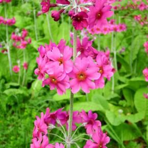 ogrody w Cortachy -0046