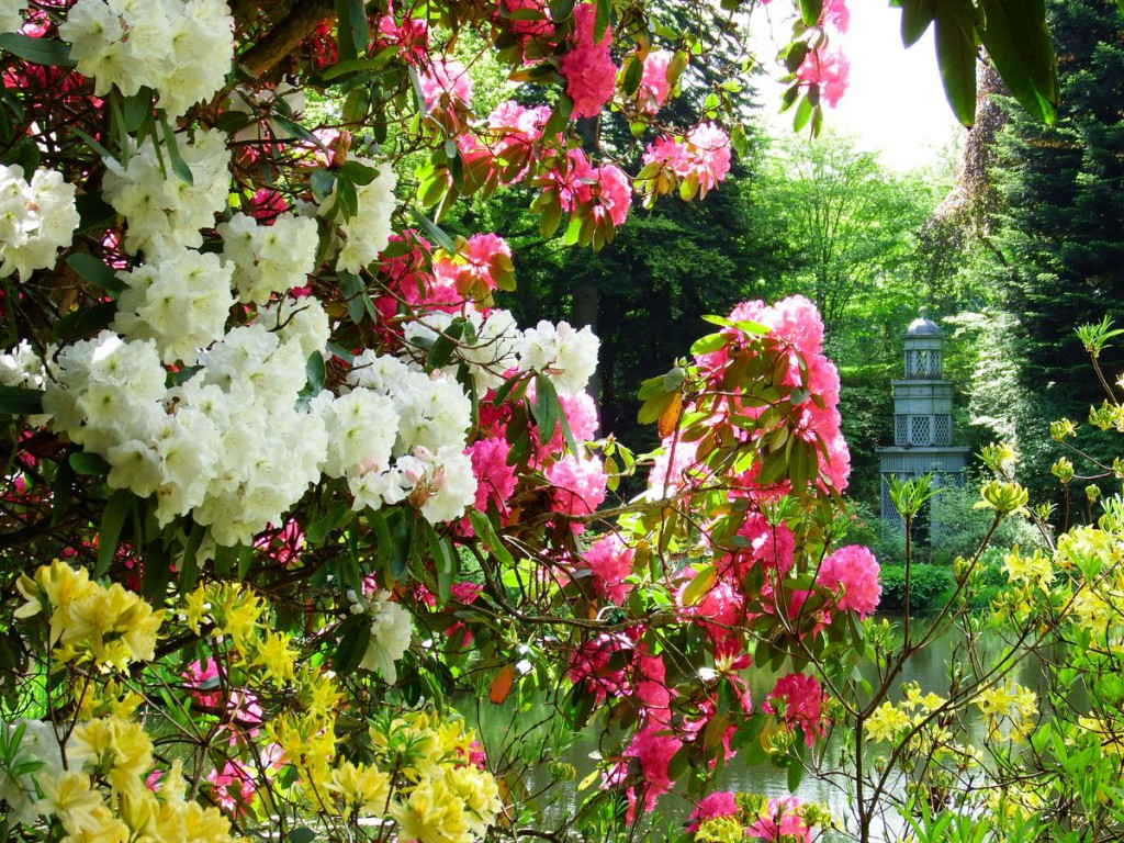 ogrody w Cortachy -0052