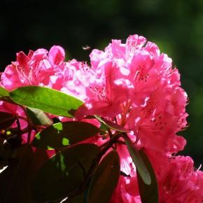 ogrody w Cortachy -0054