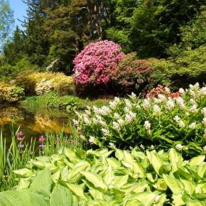 ogrody w Cortachy -0055
