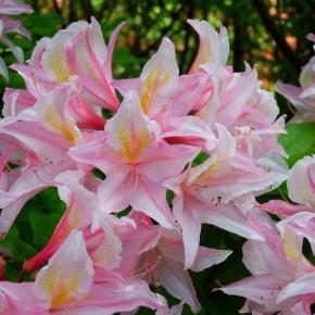 ogrody w Cortachy -0059