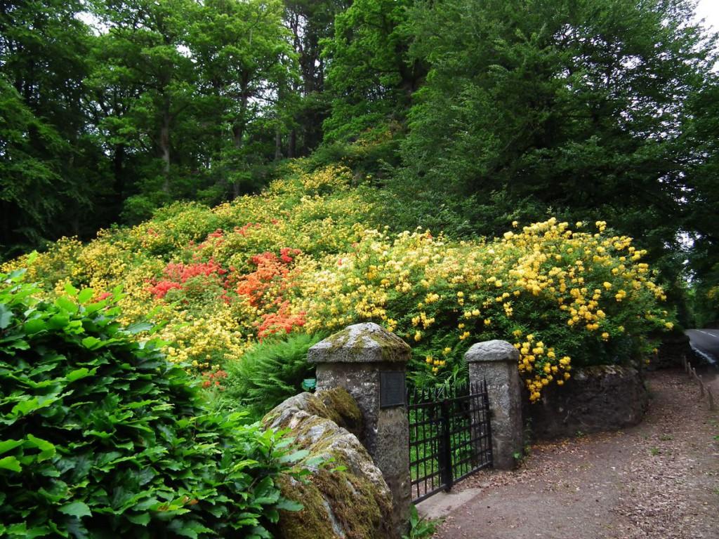 ogrody w Cortachy -0078