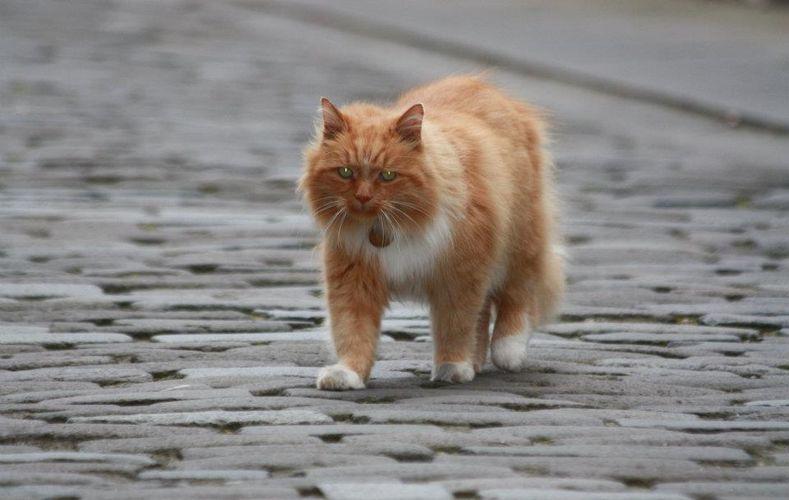 Hamish McHamish – niezwykły kot